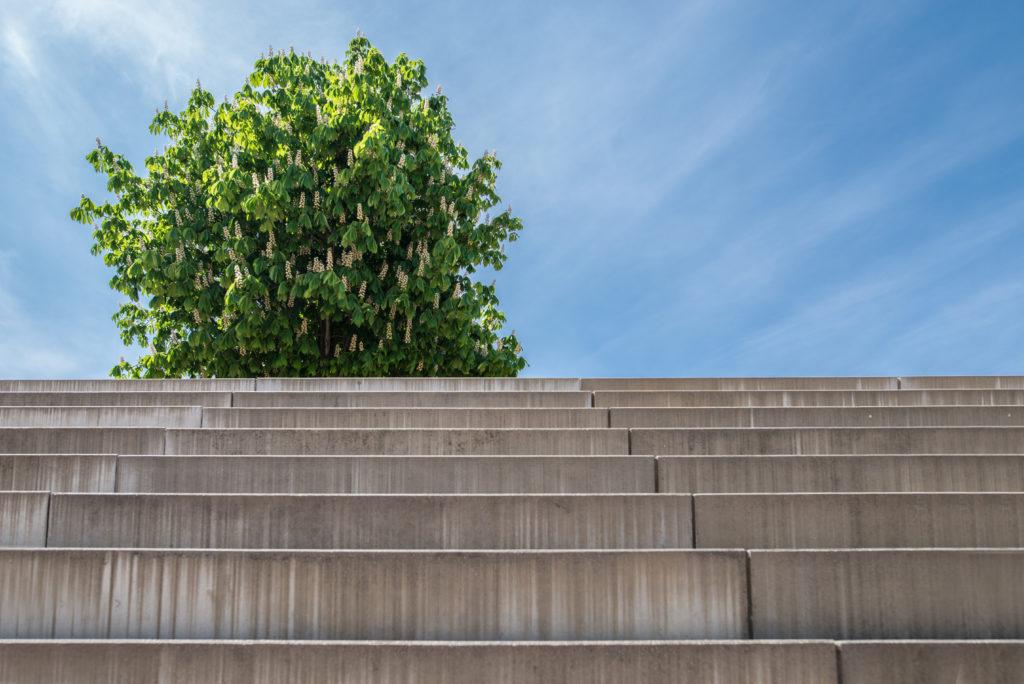 20/10/2017 Den stromů a procházka se zahradním architektem